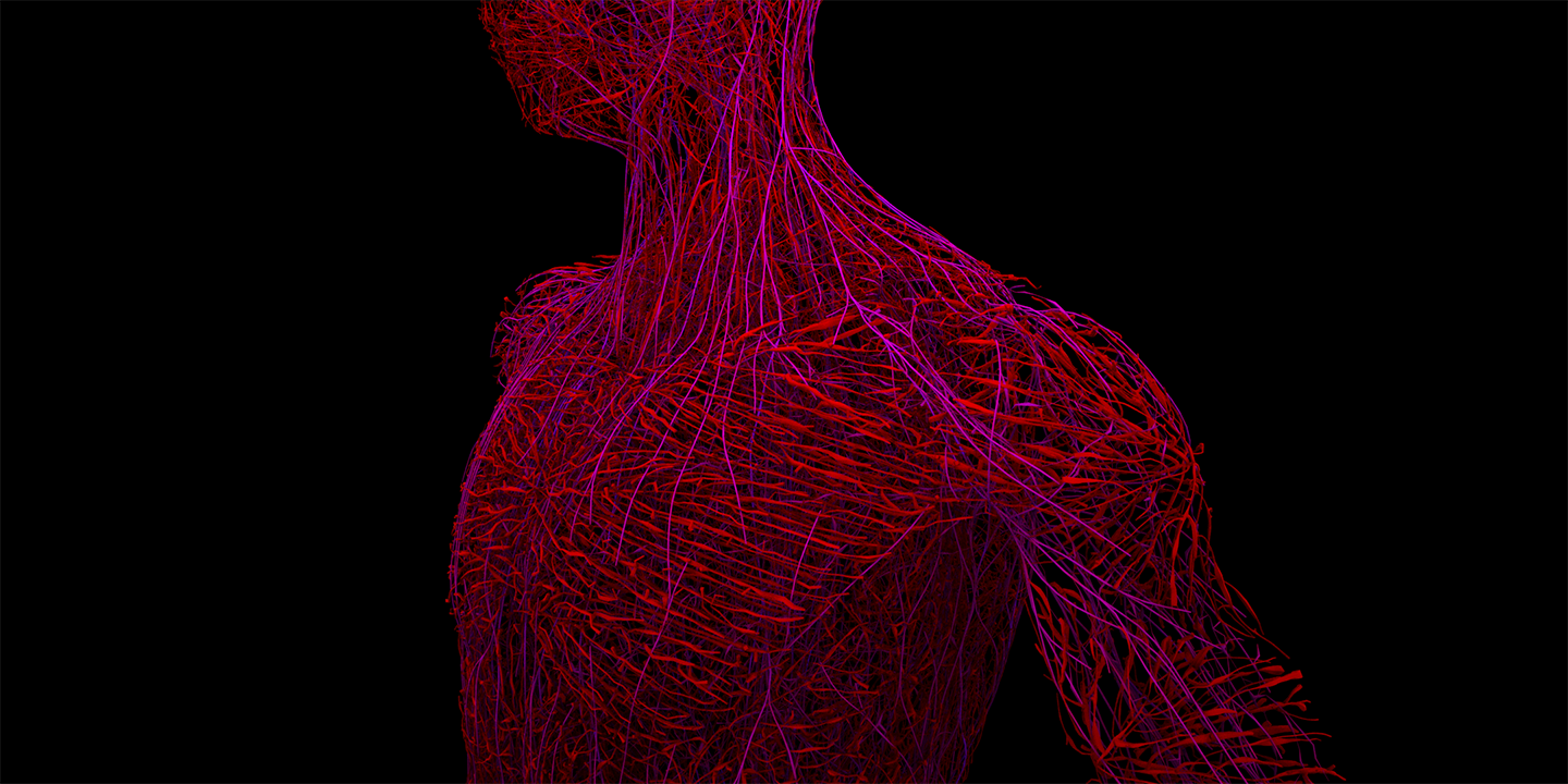 Timor Mortis, Torso - Space Colonization Algorithm & Houdini Shortest Path Node